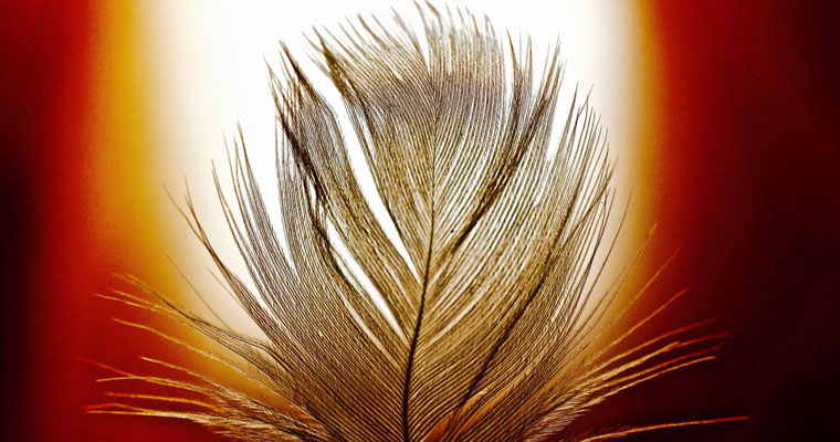 P-EOL-Backlit-feather