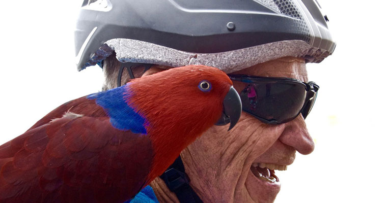 P-hearing-eclectus-parrot-on-blokes-shoulder