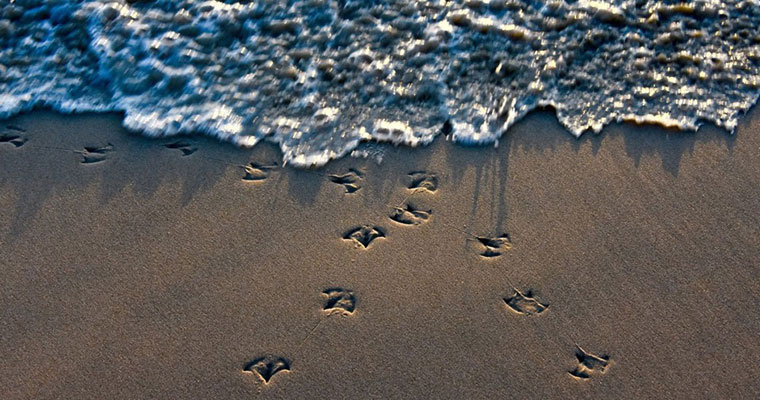 P-ratios-tide-footprints