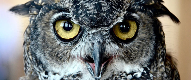 P-SubmissionInstructions-Wise-old-owl